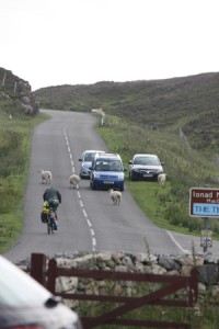 Schafe auf der Straße
