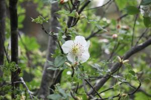 Blume im Garten von Dunvegan